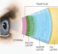 Layers of Tear Film